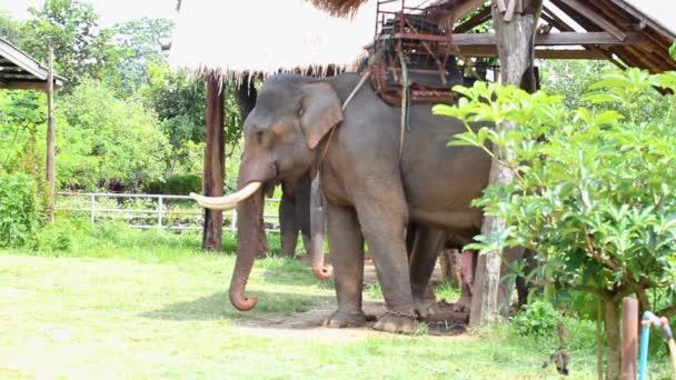 elefánt-Thaiföld.