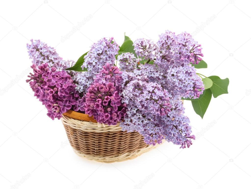 Λουλούδι σύριγγες