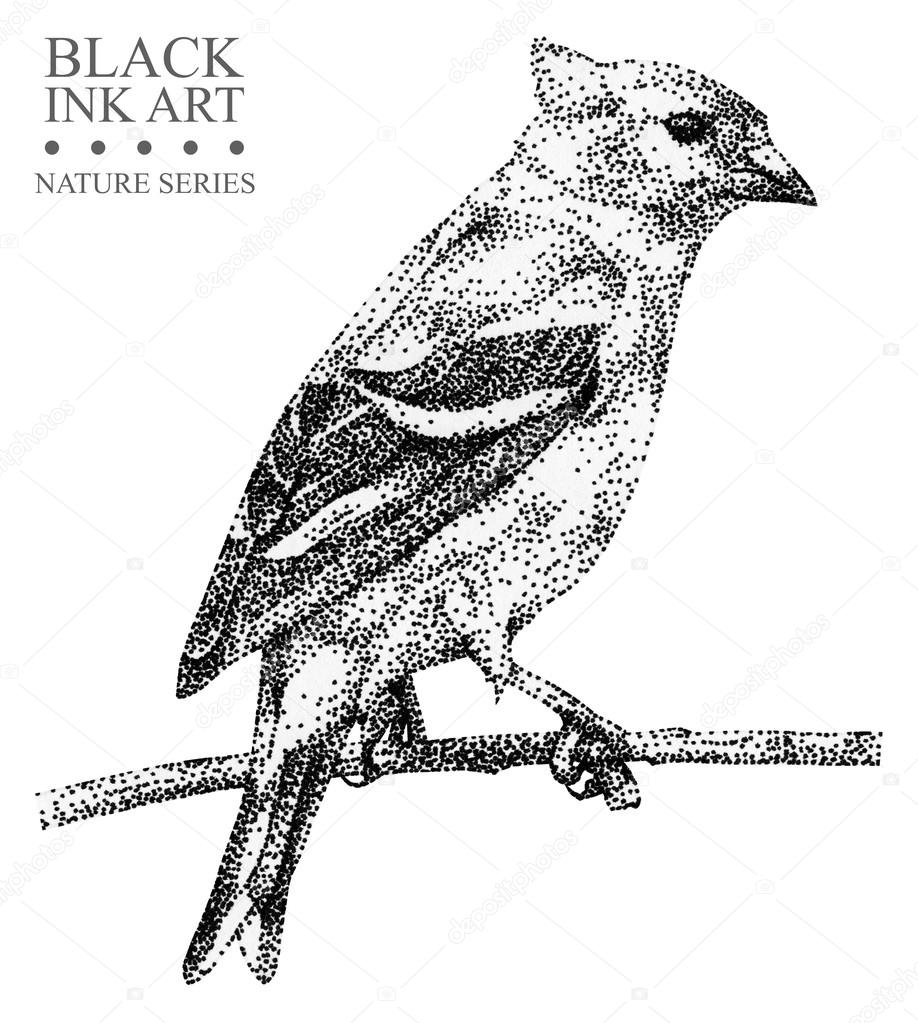 Illustration with bird Siskin drawn by hand with black ink