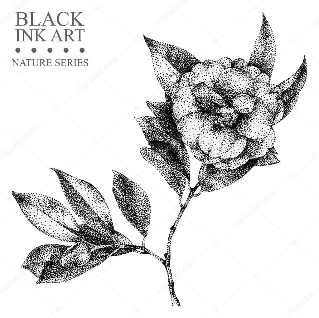 Illustration with flower camellia drawn by hand with black ink