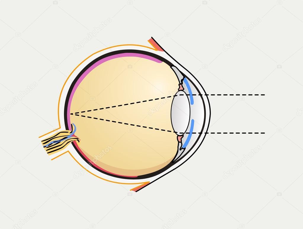 Diagrama del ojo humano — Vector de stock © kastarisentra #54880933