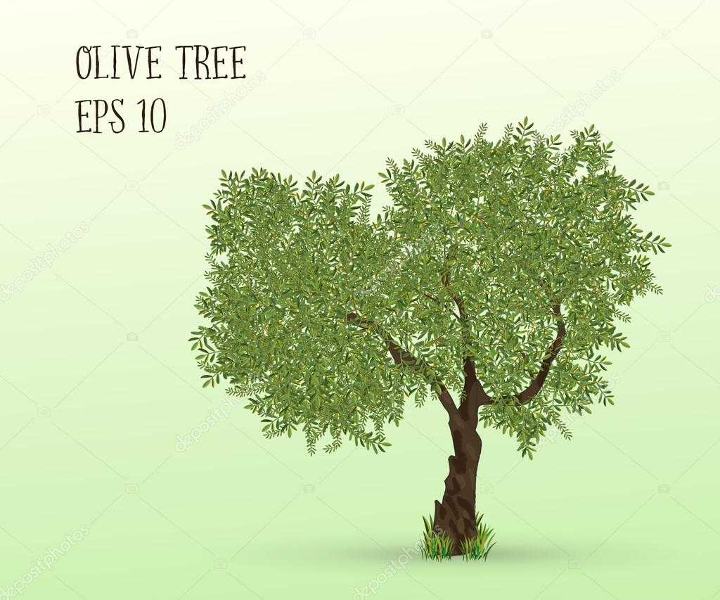 Illustration of olive tree