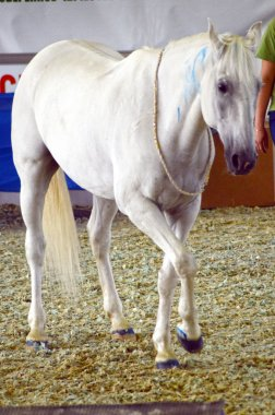 White Horse International Equestrian Exhibition