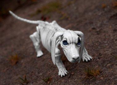Halloween Skeleton Dog