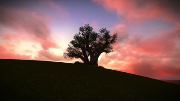 albero sulla montagna