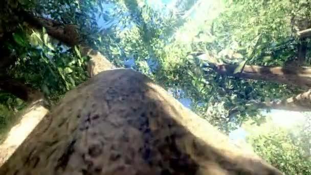 Fotoaparát kolem stromu