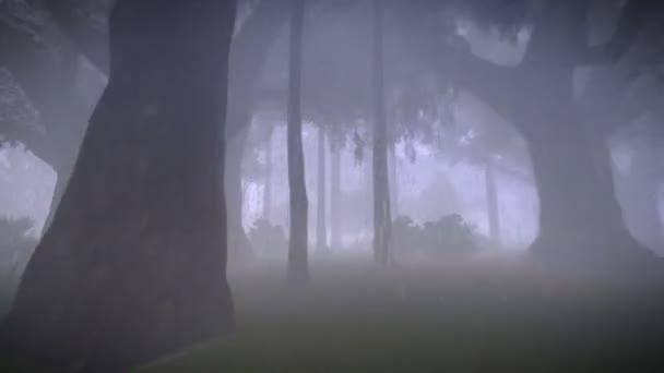 Běží v deštném pralese