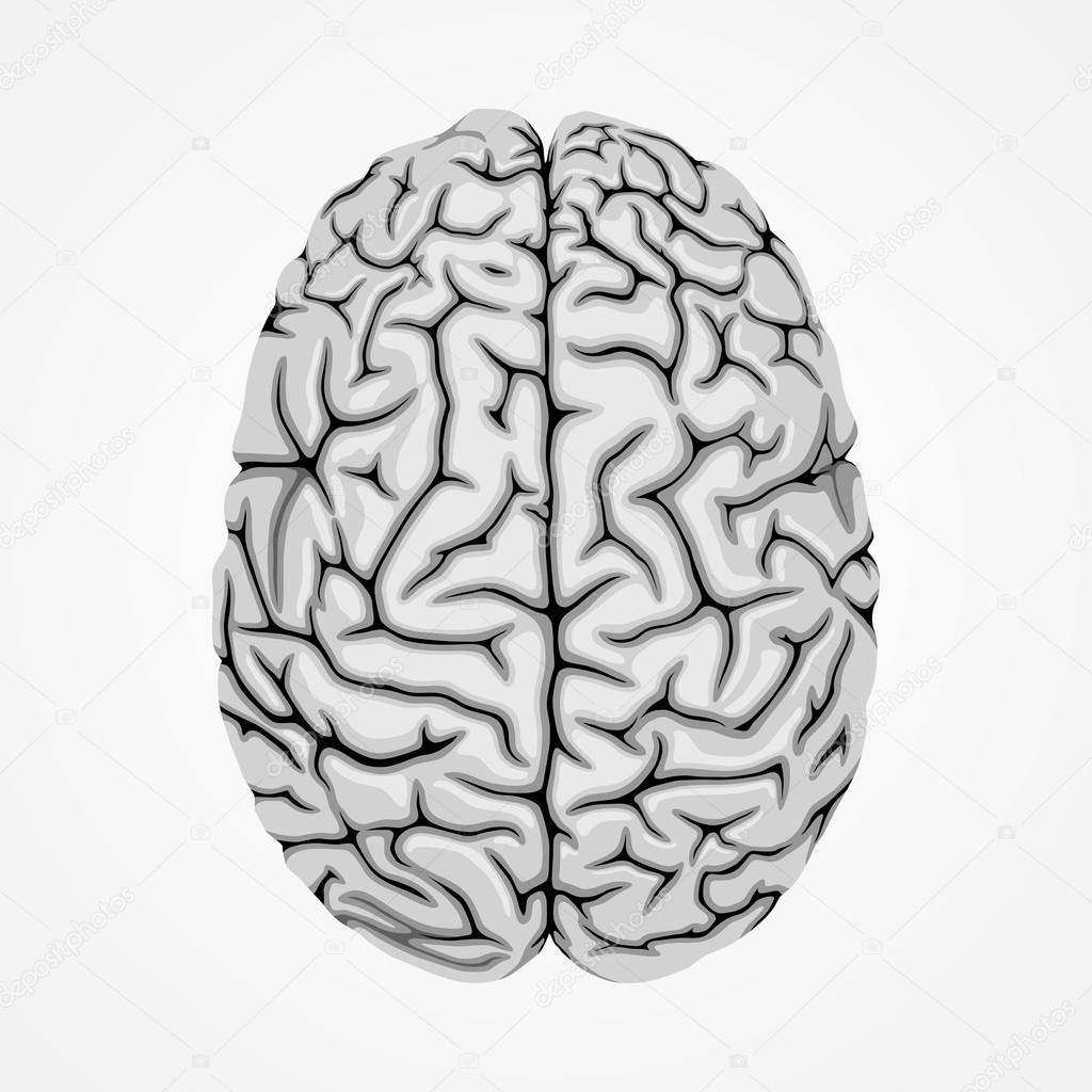 Graue Gehirn — Stockvektor © vlad210498 #80396794