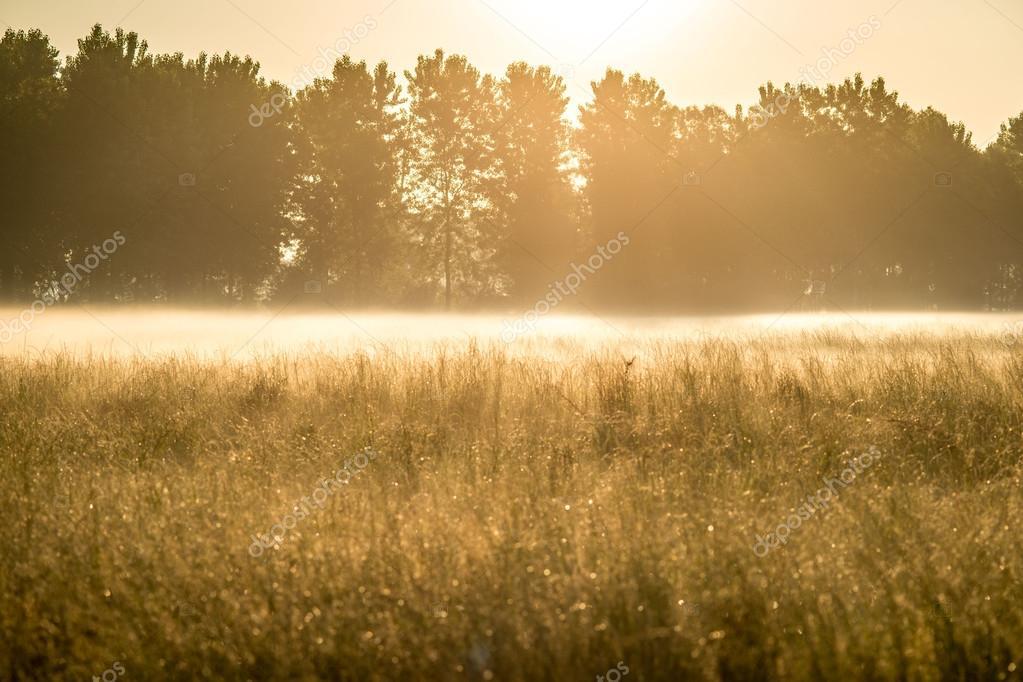 Meadow in morning mist