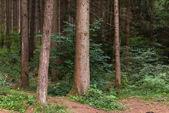 kmeny stromů v lese