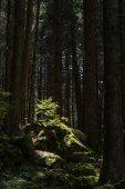 A fatörzsek az erdő