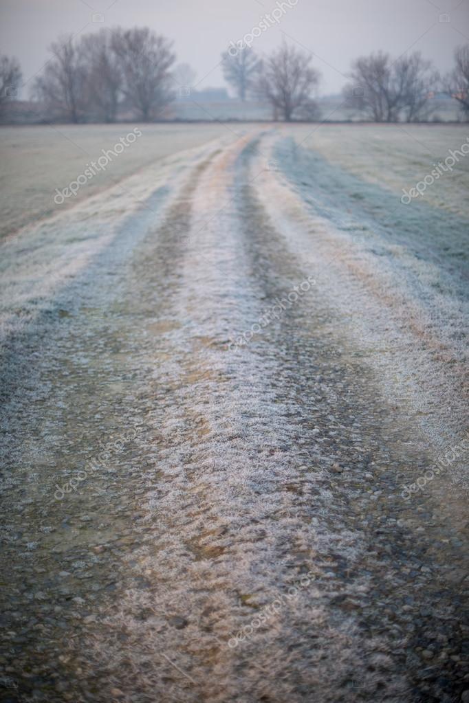 field  in the morning mist.