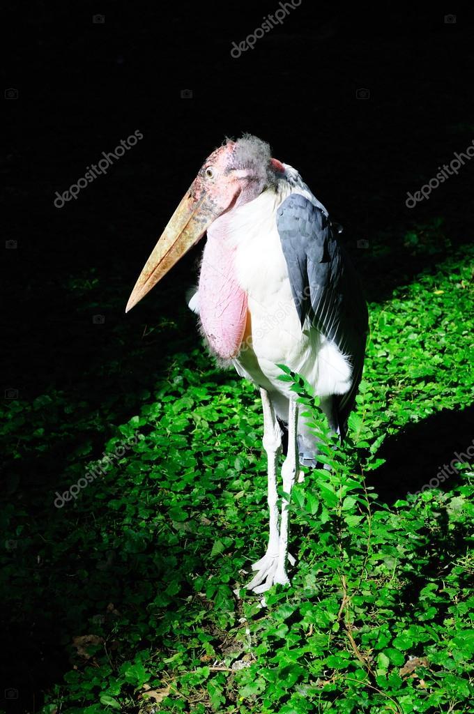 λευκό πουλί φωτογραφία
