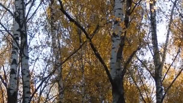 Golden podzimní listí pád v lese