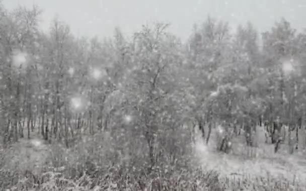 Zimní krajina v lese s padajícím sněhem a blizzard