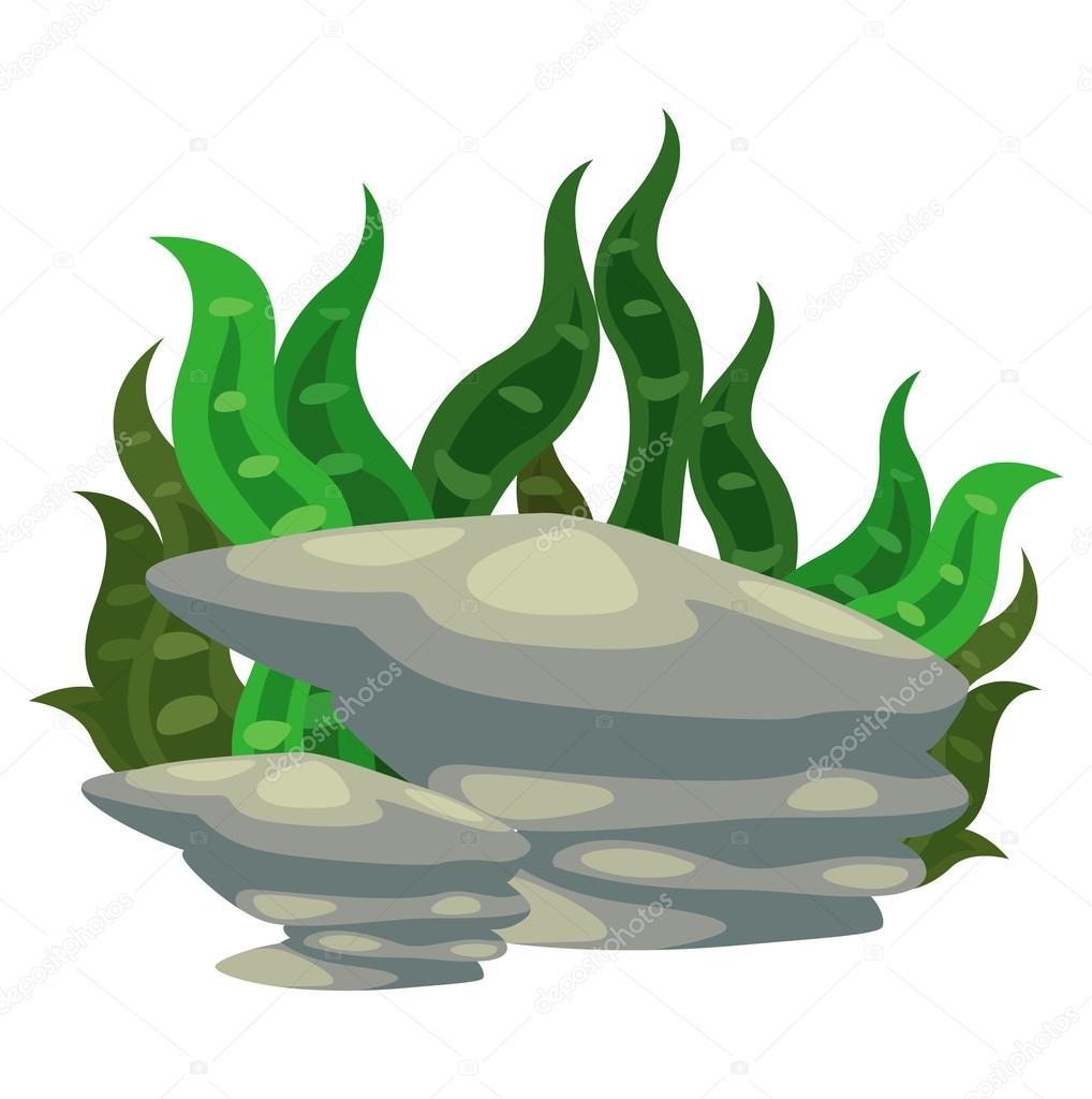 seaweed with stone vector