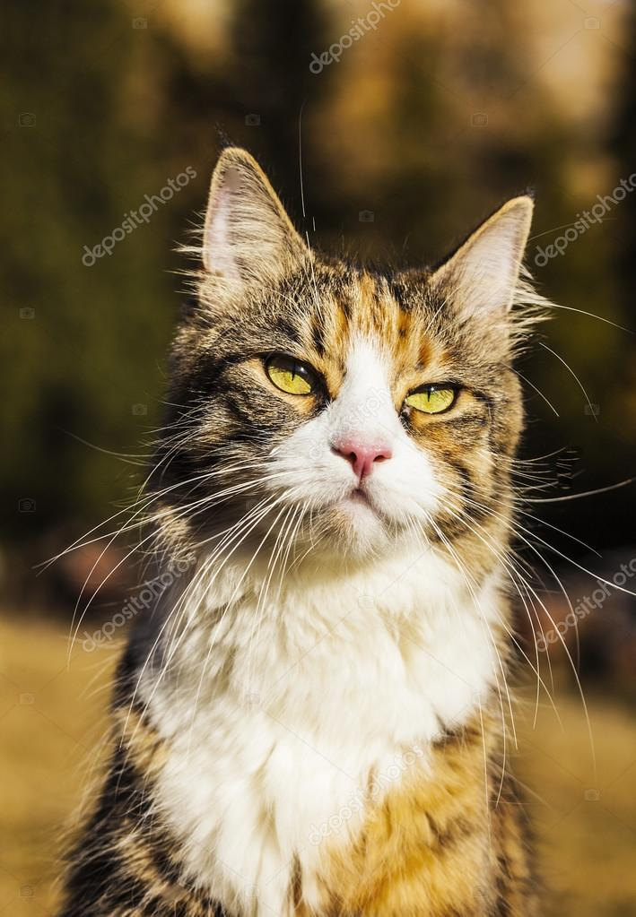 Beautiful cat in the nature