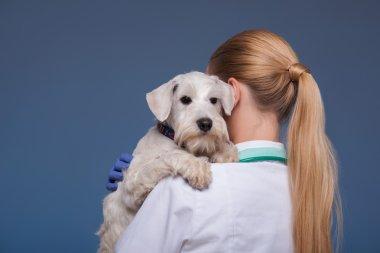 Beautiful female vet holding cute dog