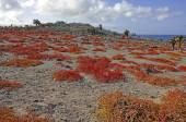 Vyprahlý pouštní krajina a kaktus, South Plaza Island, Galapágy