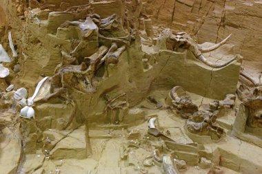 Mammoth dig site in Hot Springs, South Dakota
