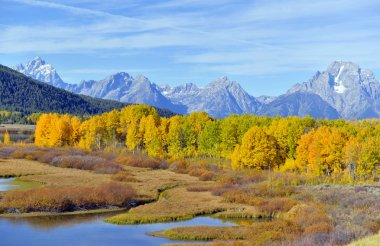 Autumn foliage, fall colors in Grand Teton National Park