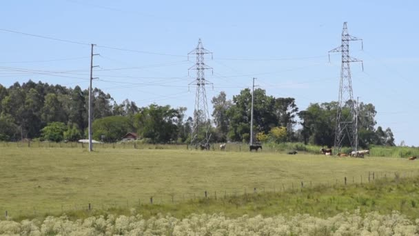 Nutztiere und Pferde. Infrastruktur für die Energieübertragung. Hochspannungsmasten durchqueren ländliches Eigentum.