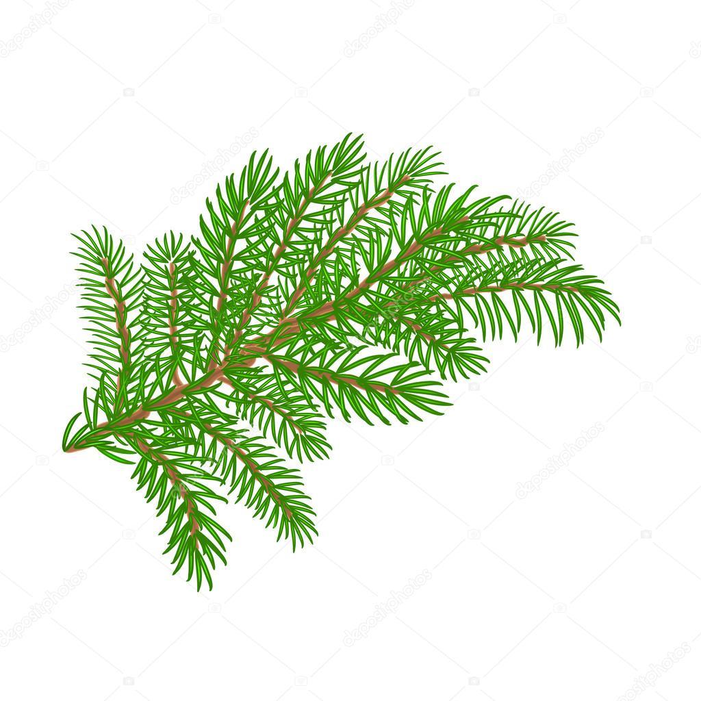 Weihnachtsbaum Ast.Fichte Ast Weihnachtsbaum Vektor Illustration Stockvektor Tina5