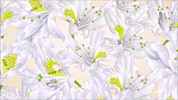 Fehér rhododendron virágok