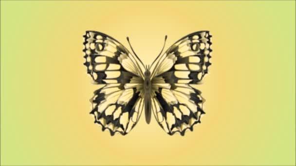 Pillangó Melanargia galathea videóinak