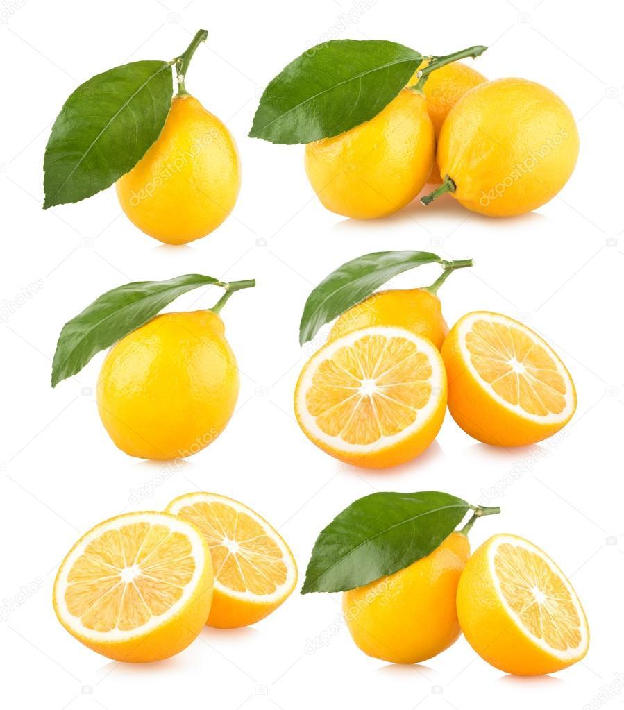 Set pf 6 lemon images