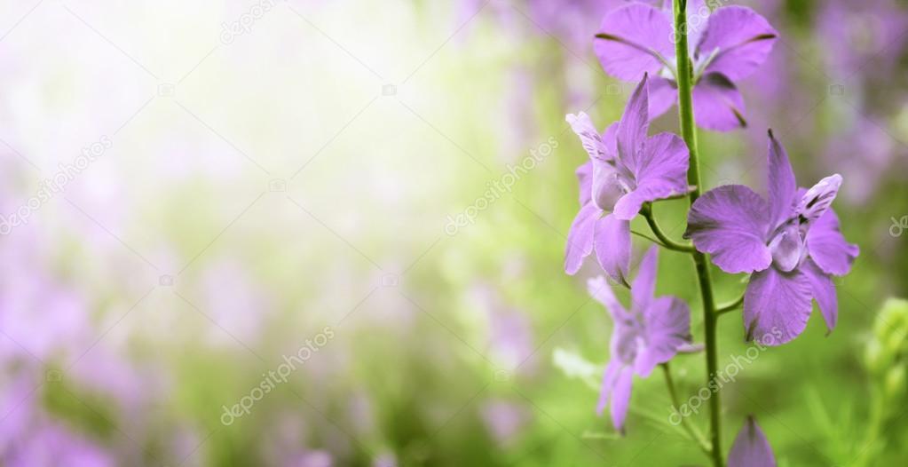Beautiful vivid purple flowers close-up