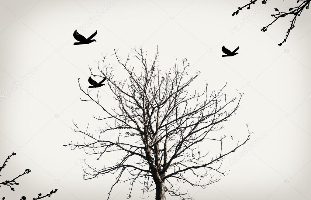 Imágenes Siluetas De Arboles Secos Con Pajaros Aves Y árbol Seco