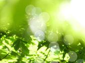 bokeh zöld háttér