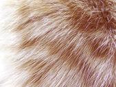 Cat fluffy fur background