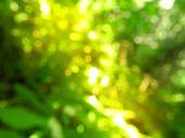 rozmazané pozadí zelené přírody