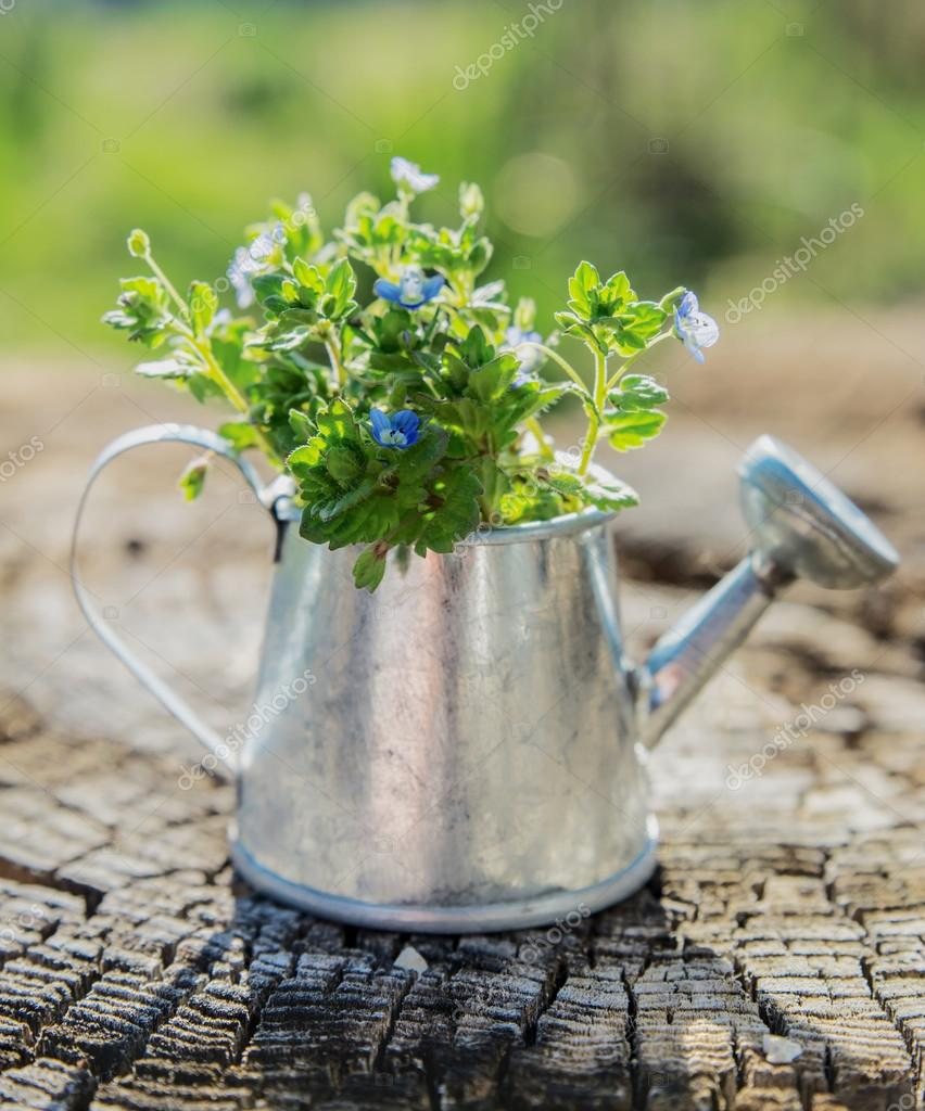 Garden tools, watering can and flowers on  old wooden background