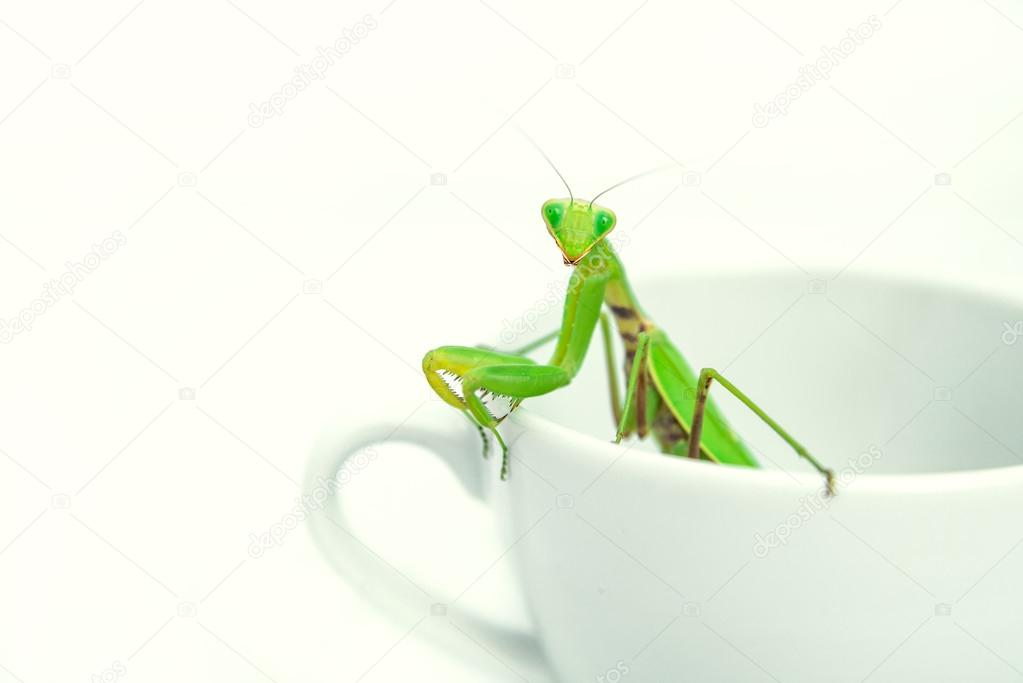 Green Mantis is posing on a transparent glass cup, close up, sel