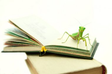 Green mantis on an old book, close up