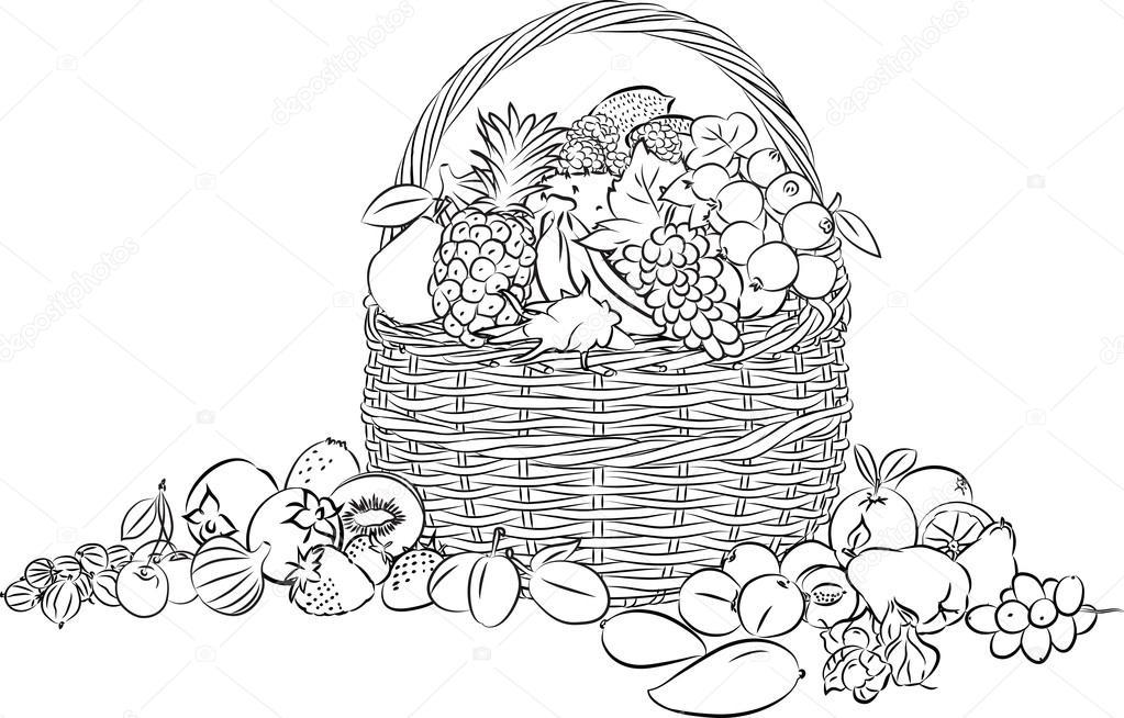 Canasta llena de frutas para colorear | vector de la cesta de frutas ...