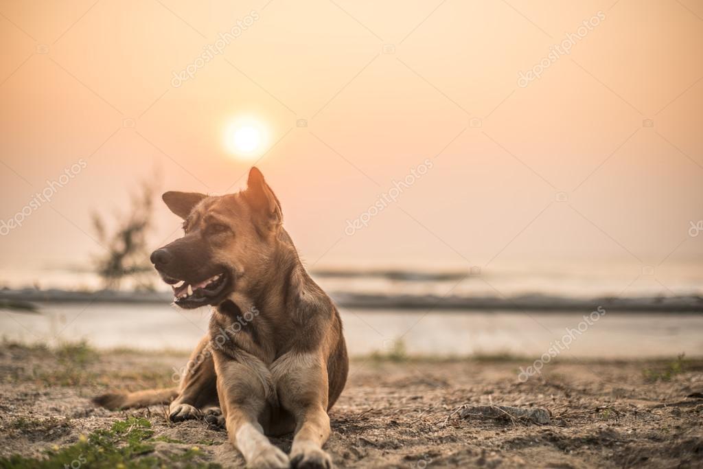 Dog lying on wet sand