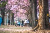 Fotografie blurred trees blurred trees