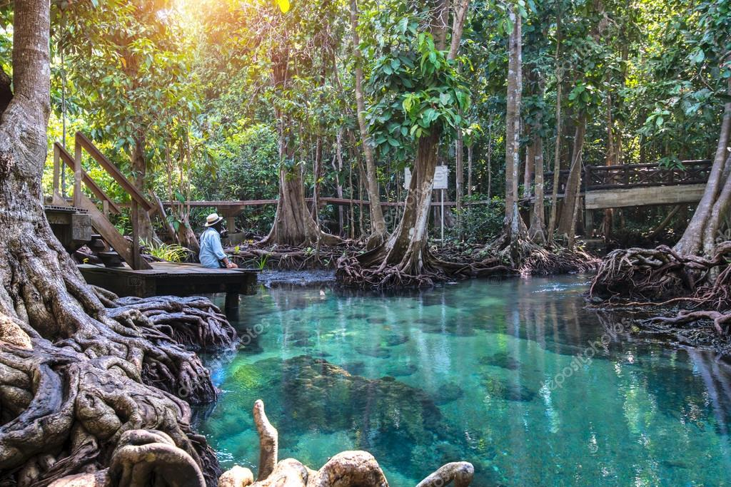 Emerald Pool in mangrove forest