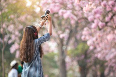 Woman taking photo of Cherry blossom