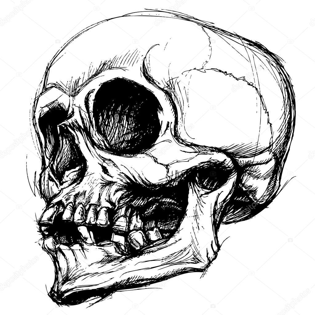 Skull Line Drawing Tattoo : Vetor de trabalho linha desenho caveira — vetores