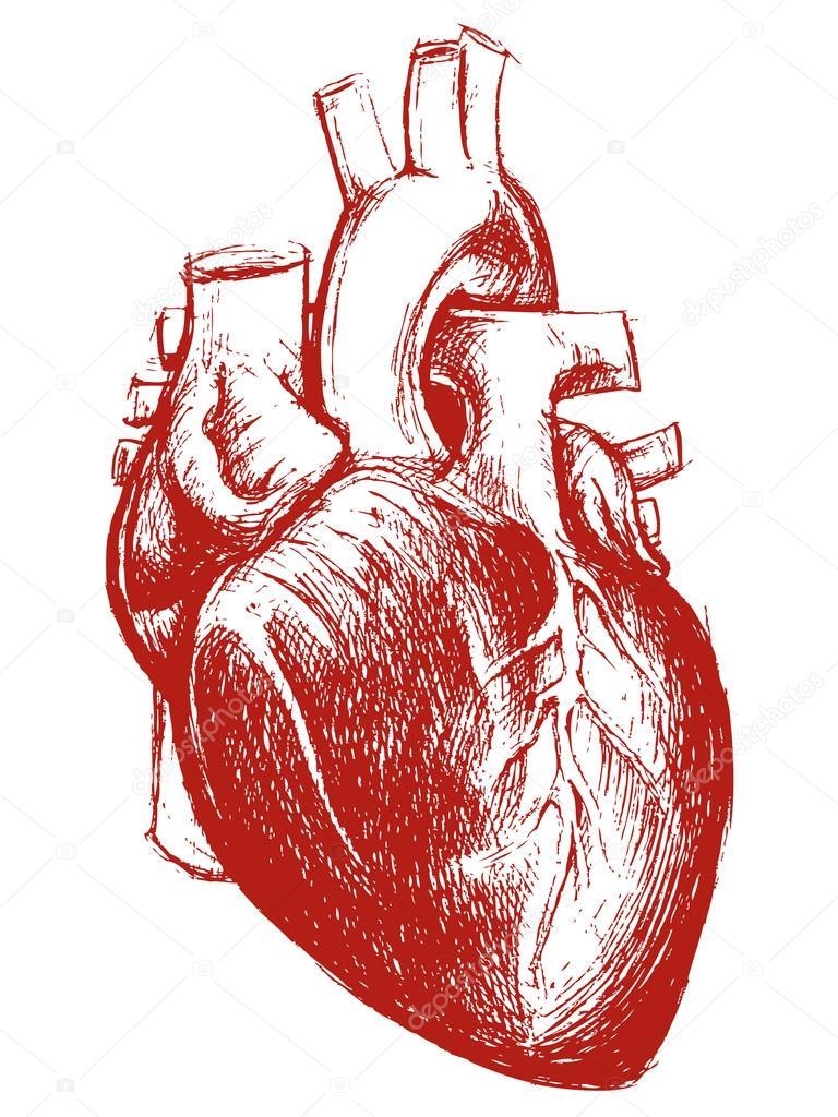 Trabajo De Línea De Dibujo Del Corazón Humano Archivo Imágenes