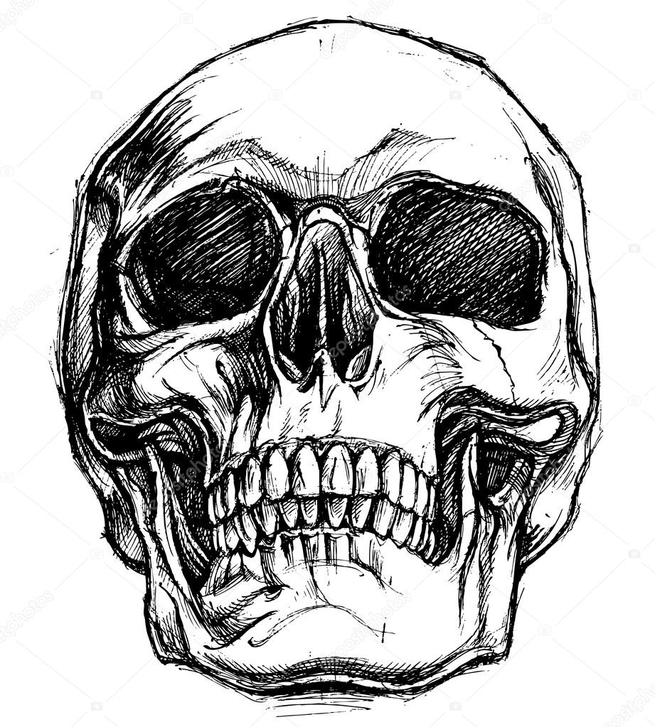 Skeleton Face Line Drawing : Vector de trabajo línea dibujo cráneo —