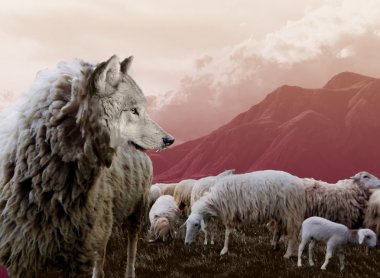 Wolf in sheep's clothing mauve tint