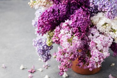 Bunch of lilac flowers in a cooper vintage jug. Blue background Copy space