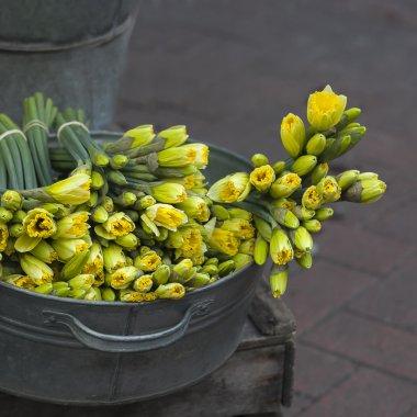 yellow daffodils  in zink bawl