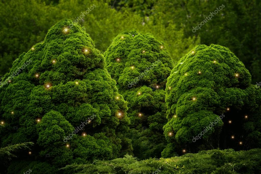 fluffy green bushes with fireflies